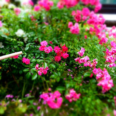 かわいい/素敵/綺麗/花/おでかけワンショット 花に癒されてます。(1枚目)