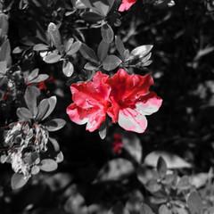 恋人/花/フィルター/おでかけワンショット 夜のお散歩で見かけた花ですが恋人のように…