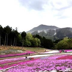 羊山公園/おでかけワンショット 埼玉県秩父の羊山公園の芝桜です。 少し曇…