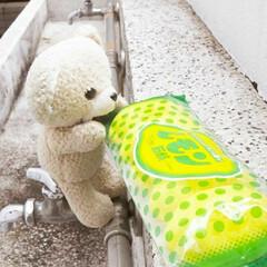 ニッサン 化粧石鹸 レモン 5個入り(せっけん)を使ったクチコミ