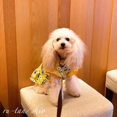 犬/ペット/トイプードル/わんこ同好会 ☆ 昨日、 獣医さんに受診。 ・ ・ ま…(1枚目)