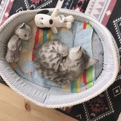 子猫/癒し/ニャンモナイト/かわいい/にゃんこ/うちの子自慢/... ちっちゃなニャンモナイト😽❣️