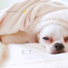 ET/研ナオコ/似てる/ぶさかわ/変顔/モノマネ/... ↟↟↟  もう… これは、E.T. ❗…