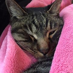 ぶちゃいく/ぶちゃカワ/ブチャイク寝/猫/cat/かわいい/... おネムのブチャ顔