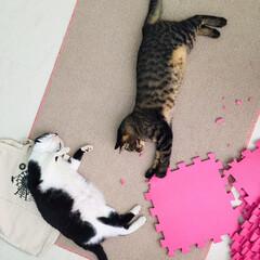 保護猫/元野良猫/マスク猫/キジトラ/猫/かわいい/... イタズラ楽しいね〜❤️