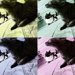 フォトジェニック/大口/あくび/怪獣/マスク猫/保護猫/... 怪獣現る! ニャンちゃん逃げて〜