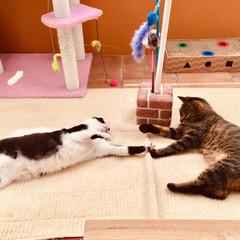 ミュー (mju:) 猫用おもちゃ ニャンコロビー ボックス ナチュラル(爪とぎ)を使ったクチコミ「タッチタッチ!」(1枚目)