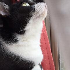 ルッキング/love/かわいい/cat/猫/窓際/... 鳥さんいるかな?