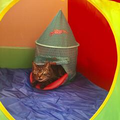 キッズテント ボールテント プレイハウス ボールハウス ボールプール おしゃれ かわいい パステル カラフル テント 室内用 キッズ テント(ボールプール)を使ったクチコミ「嬉しそうな顔をしています^ - ^」