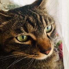 かわいい/cat/猫/ちい子
