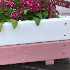 DIY/塗料/ガーデニング/プランター/和信ペイント/簡単DIY/... ガーデニング塗料ではっ水効果抜群のエクス…