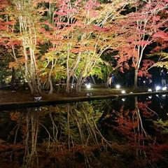 旅行/岐阜県/ひとり旅/三度の飯より旅行好き/次のコンテストはコレだ! この秋唯一見れた紅葉  愛知県の香嵐渓に…