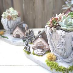 Creema/クリーマ/minne/ミンネ/樹脂粘土/モルタル鉢/... 「多肉植物のなる木」を作りました。 こん…
