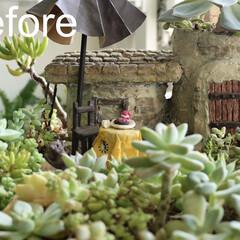 plantsgardenparadise/プランツガーデンパラダイス/多肉植物植え替え/多肉植物のある暮らし/多肉植物寄せ植え/多肉植物/... 室内で育てている大きな多肉植物寄せ植えの…(2枚目)