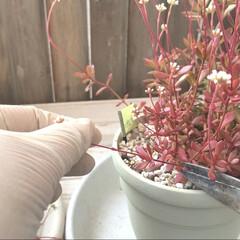 YouTube/ガーデニング/植物のある暮らし/多肉植物のある暮らし/エケベリア/紅稚児/... 春なので多肉植物 色々植え替え中です🥀 …