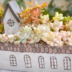 DIY/おうち鉢/リメ缶/リメイク缶/多肉植物のある暮らし/多肉植物寄せ植え/... 自宅用にお菓子の空き缶で おうち鉢を作っ…