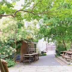 Cafe/カフェ/雨季ウキフォト投稿キャンペーン/令和の一枚/フォロー大歓迎/LIMIAスイーツ愛好会/... 週末に行ったcafe。 greenに癒さ…