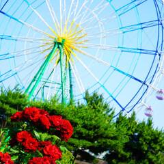 ひたち海浜公園/海/観覧車/薔薇/晴れ間/初夏/... 梅雨の晴れ間にひたち海浜公園で咲いている…
