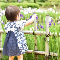 女の子ベビー/赤ちゃん/1歳/お散歩/愛知/はじめてフォト投稿/... 雨上がりのお散歩で花しょうぶを見に行きま…