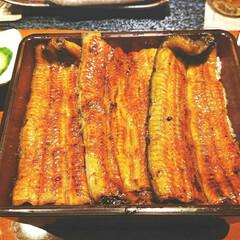 割烹蒲焼 八十八 町田店/割烹/うな重/おでかけ/はらぺこグルメ うなーぎ! ふあふあのトロトロで肉厚。 …