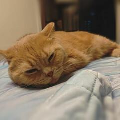 おやすみショット/うちの子ベストショット お休み中
