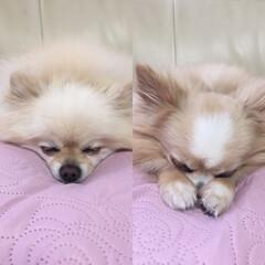 暮らし それぞれの寝姿💤 #manaluffy …(1枚目)