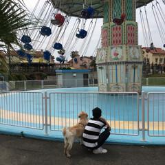 遊園地/大型犬/ゴールデンレトリバー/ゴールデンレトリーバー/おでかけ/フォロー大歓迎/... ワンちゃんも入れる遊園地へ! 子供たちが…