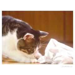 ねこ/猫/フォロー大歓迎/LIMIAファンクラブ/LIMIAペット同好会/にゃんこ同好会 『虫さん発見!!(๑• ̀д•́ )✧』…(3枚目)
