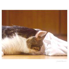 ねこ/猫/フォロー大歓迎/LIMIAファンクラブ/LIMIAペット同好会/にゃんこ同好会 『虫さん発見!!(๑• ̀д•́ )✧』…(2枚目)