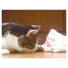ねこ/猫/フォロー大歓迎/LIMIAファンクラブ/LIMIAペット同好会/にゃんこ同好会 『虫さん発見!!(๑• ̀д•́ )✧』…(1枚目)