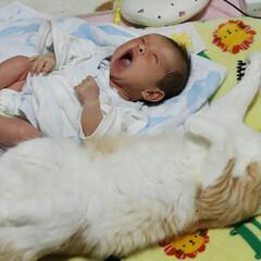 仲良し お兄ちゃん(にゃんこ)が 赤ちゃん返りし…