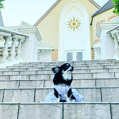 ジューンブライド/わんこ同好会/うちの子ベストショット 息子の結婚式の前日にチャペルの階段で撮ら…