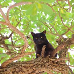 猫/猫が好き/島猫 黒猫と出会うと、何か良いことある気がしま…