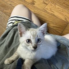 パパ激怒/やんちゃなニャンコ/やんちゃすぎ/猫との暮らし/猫のいる暮らし/猫 おはようございます 最近、やっと家に慣れ…(1枚目)