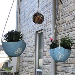 縁台作れないか思案中/DIYしまくりたい/床も張り替えたい/ウッドデッキ購入予定/花壇にも植えたいけど花がない/玄関前/... ようやく玄関前整備できました ホムセンで…