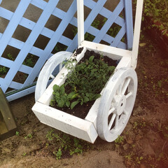 週末またホムセンです/小手鞠も花壇に植えた/星空マム/ペチュニア/花を寄せ植えしました/プランター/... 昨日作った手押し車型プランターにお花植え…