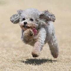 こころ姫/はじめてフォト投稿 飛行犬撮影をしてもらいました。