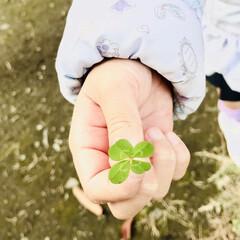 小さな幸せ/四つ葉のクローバー/娘 娘が幼稚園の帰り道、初めて四つ葉のクロー…