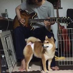 豆柴/ギター/音楽/犬/犬派/フォロー大歓迎/... ギターを弾けばボーカルスタンス 座ったら…