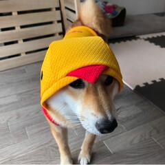 ペット/犬/柴犬/おでかけ/ファッション/暮らし/... なまえの刺繍入りのお洋服届いた!嬉しい!…