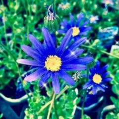 花/植物/写真/おでかけ/至福のひととき/LIMIAおでかけ部/... 可愛いのが咲いてましたよ カワ(・∀・)…