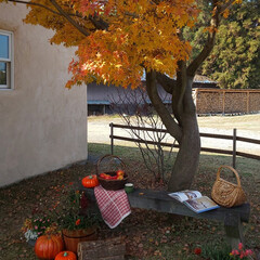 注文住宅/デザイン住宅/可愛い家/素敵な暮らし/新築住宅/家をつくる/... 紅葉を庭で楽しむ
