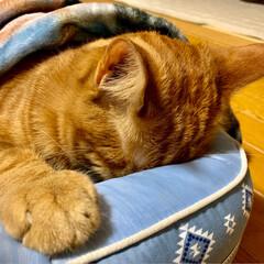 LIMIAペット同好会/にゃんこ同好会/保護猫 寝方もそれぞれ(´-﹃-`)Zz…