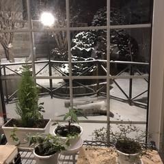 観葉植物/冬/お正月2020/暮らし/フォロー大歓迎 今年の冬は雪が少なすぎです☃️ いつ大雪…
