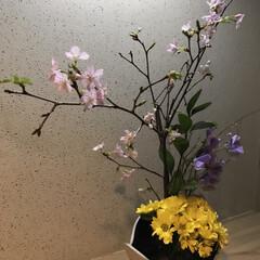 生花/春の花 桃の花が売っていたので。 処分品のお花ば…
