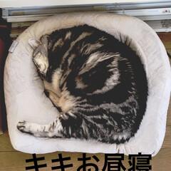 猫/猫との生活/フォロー大歓迎 午後2時。 お昼寝中のニャンコそれぞれ