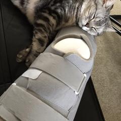 猫派/にゃんこ同好会 先週膝を骨折したのにギプスを枕に寝る猫🐱
