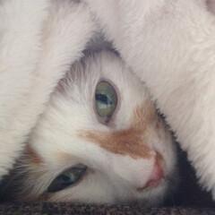 猫派 三角に収まっていますー☺️
