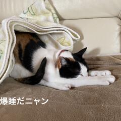 猫好き/ネコ 連投失礼します。  うちのニャンコは 猫…(1枚目)
