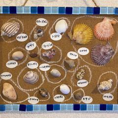 貝殻 連投ごめなさい  貝を投稿してふと、玄関…